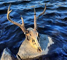 Scull on Rock on River by liaferro