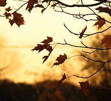 Sunlit Autumn Leaves by Emily  Lane