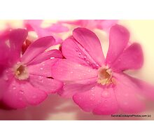 *Pink Weeds* ~ The Orton Effect ~ Photographic Print