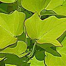 Summer Leaves by Monnie Ryan