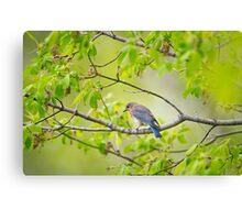 Still near the nest Canvas Print