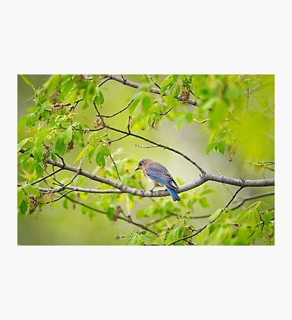 Still near the nest Photographic Print
