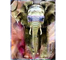 Baby Shaman Elephant Totem & Spirit Guide, 2007  Photographic Print