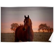 Russet Sunset Poster