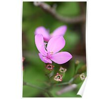Pink flowers - Nature - Australia Poster