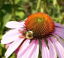 Bumble Bee Love by StuttgenStudios
