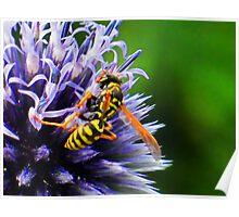 Pollen Patrol Poster