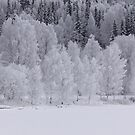 Panorama Frostscape by Johan Larson