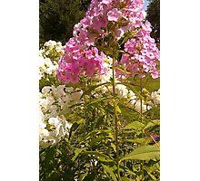 Floral 1 Photographic Print