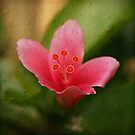 Perfectly Pink II by Tanya Rossi