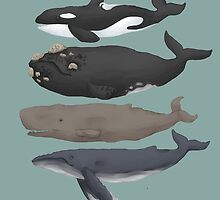 Whale Chart by orcabelly
