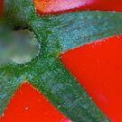 red star by yvesrossetti