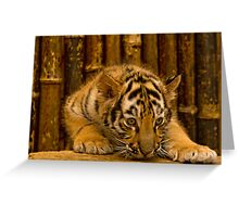 Bengal Baby Greeting Card