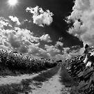 Sunny Matinee by sundawg7