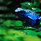 Blue Frog by weirdbird