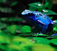 Blue Frog by weirdbird