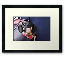 Doggie Bag Framed Print
