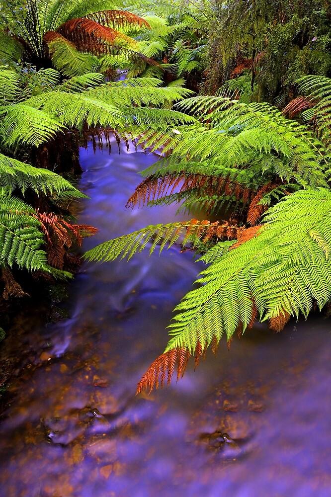 """""""Ferns~Creek"""" by Husky"""