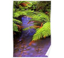 """Ferns~Creek"" Poster"