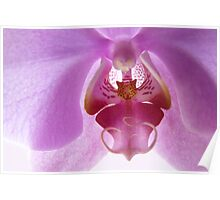 Orchid in the sunlight Poster
