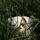 CASH THE BULL-CUTE-DOG by Daniel  Oyvetsky
