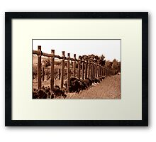 All lined up Framed Print
