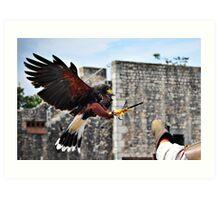 Provins, falconry Art Print
