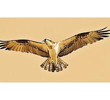 Conversation with an Osprey, Montana Osprey photo. Photographic Print
