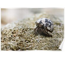 Heavy Load - Hermit crab Poster