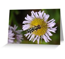 Hoverfly on Mauve Flower Greeting Card