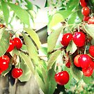 cherries by the mile by Danielle Bloxsom