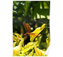 Golden Dragonfly Poster