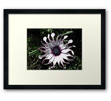 Fresh as a Daisy - Whirligig at Dawn Framed Print