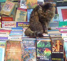 """Literate Feline"", Istanbul, Turkey by Jennii Booth"