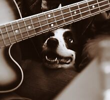 Dog & Bass by Luiz  Filipe