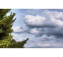 The Trees and Clouds Photographic Print