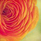 Bright Orange Bloom by ameliakayphotog