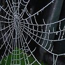 Bejeweled Web by Geraldine Miller