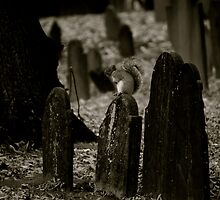 Squirrel on a Grave  by Emily  Lane