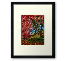 Cherry Blossoms in the Shade Framed Print