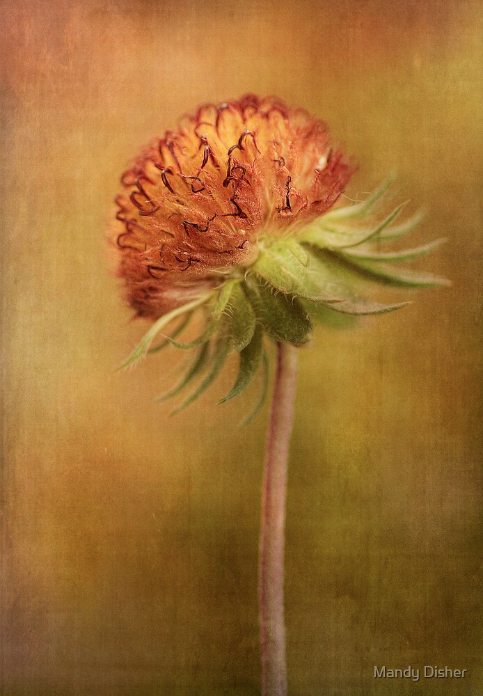 Spent by Mandy Disher