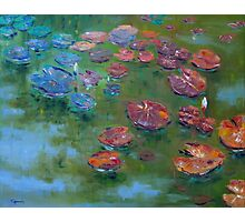 Lily Pond Photographic Print