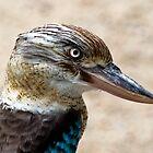 Blue Winged Kookaburra by Jenny Dean