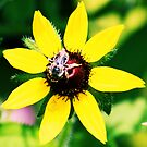 A Bee & A Spider Sat Down Beside Her by Carrie Bonham