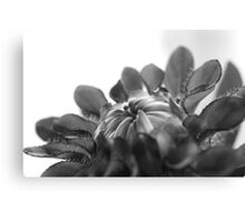 Black and white flower ready to open  Canvas Print
