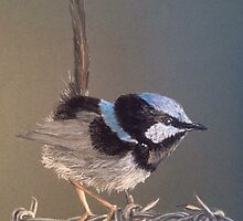 Terry's Cheeky Little Blue Wren by Leonemb