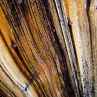 door wood by yvesrossetti