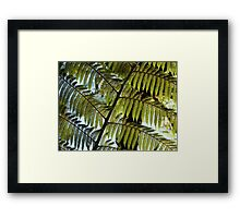 Tree Fern, New Zealand Framed Print