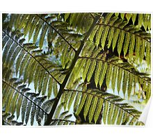 Tree Fern, New Zealand Poster