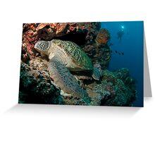 Green Turtle, Bunaken National Marine Park, Indonesia Greeting Card